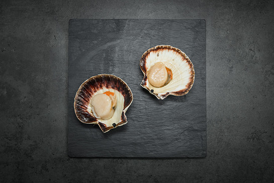 Scallops%28pack of 4%29
